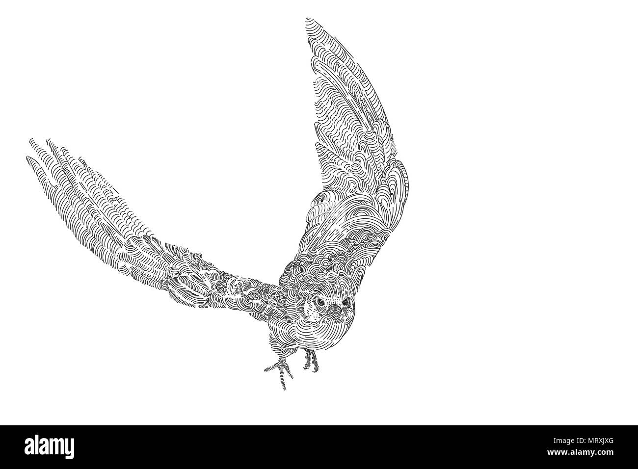 Flying Amur falcon bird isolated on white background, drawing vector illustration - Stock Vector