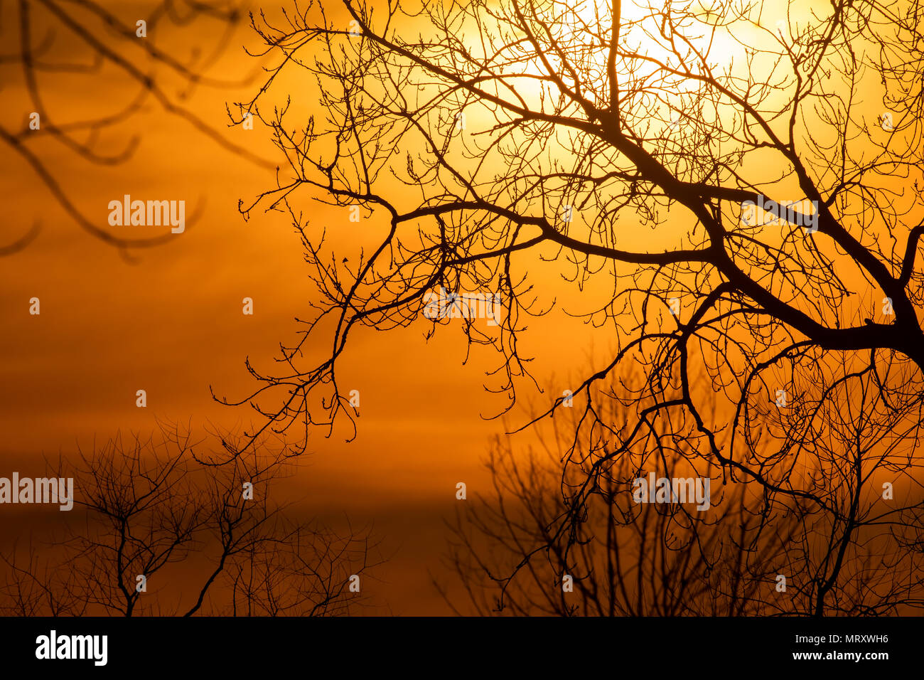 A beautiful sunset in magee marsh wildlife area during a cold winter evening - Stock Image