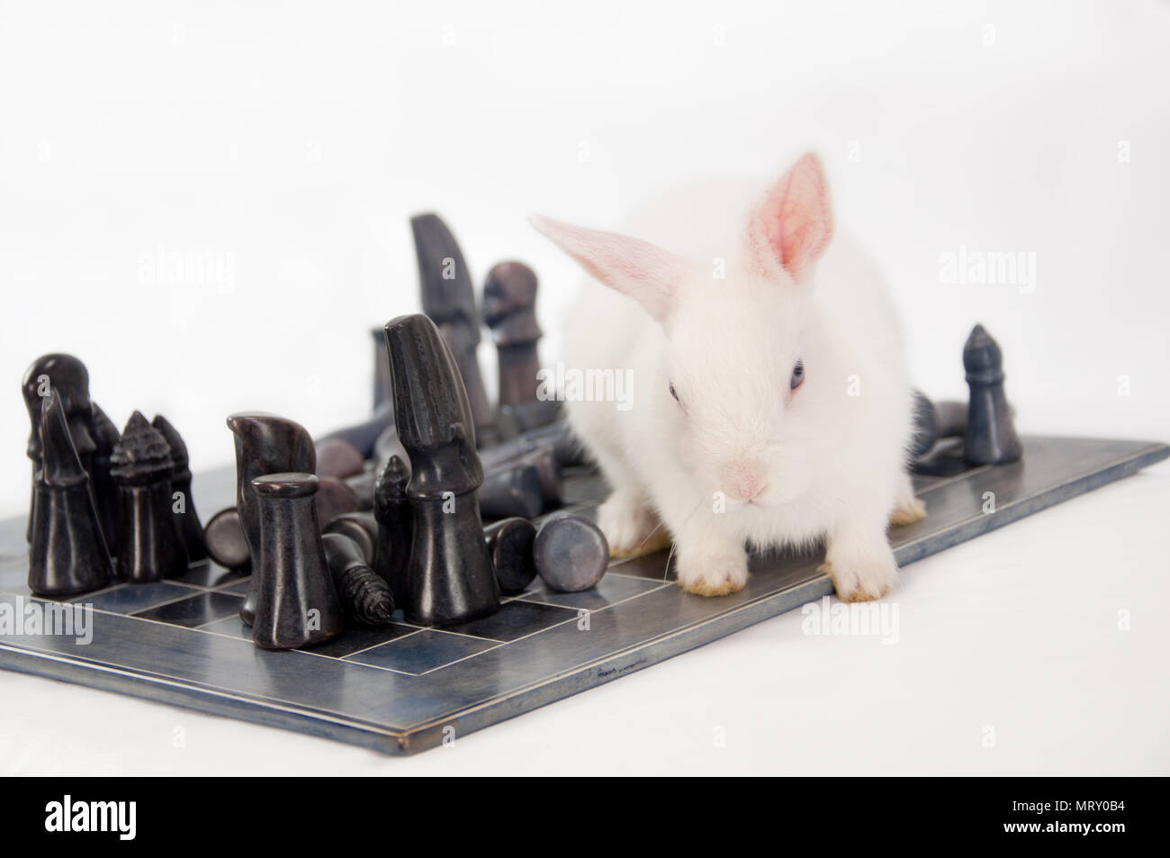 Rabbit Walking on a ChessBoard - Stock Image