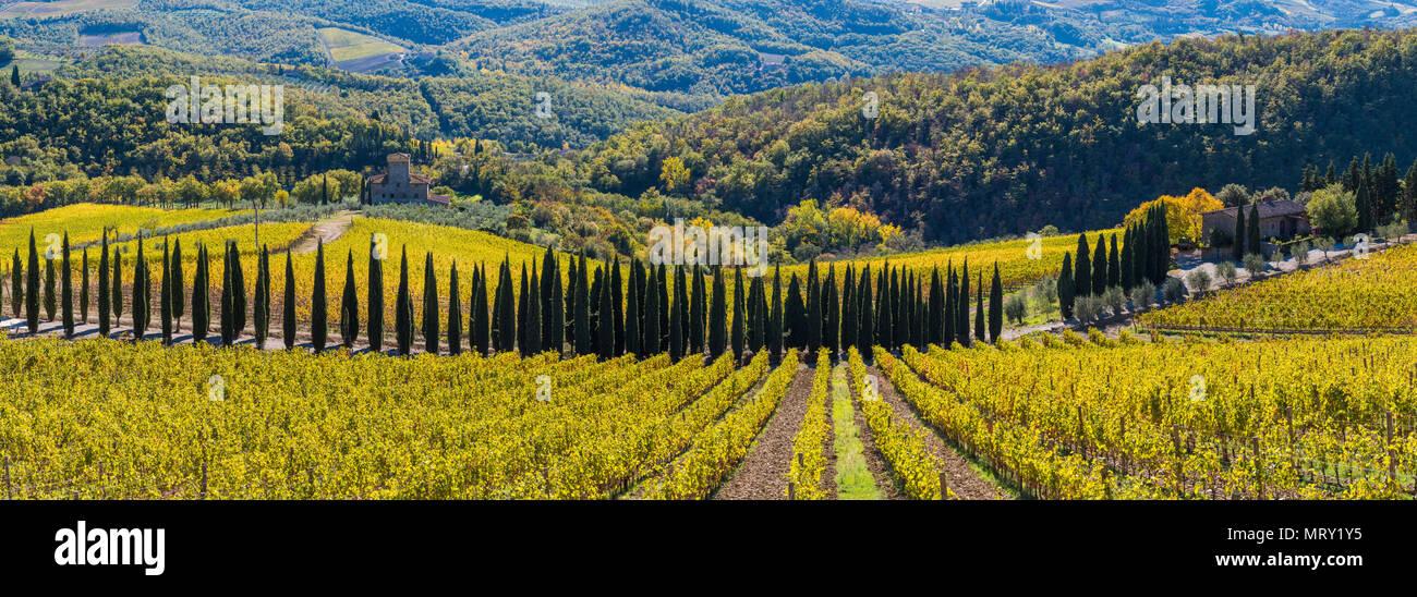 Albola castle's vineyards, Radda in Chianti, Siena, Tuscany, Italy. - Stock Image