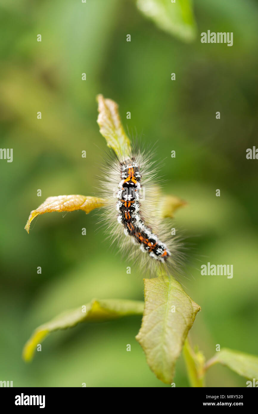 Type Of Caterpillar Stock Photos Type Of Caterpillar Stock Images