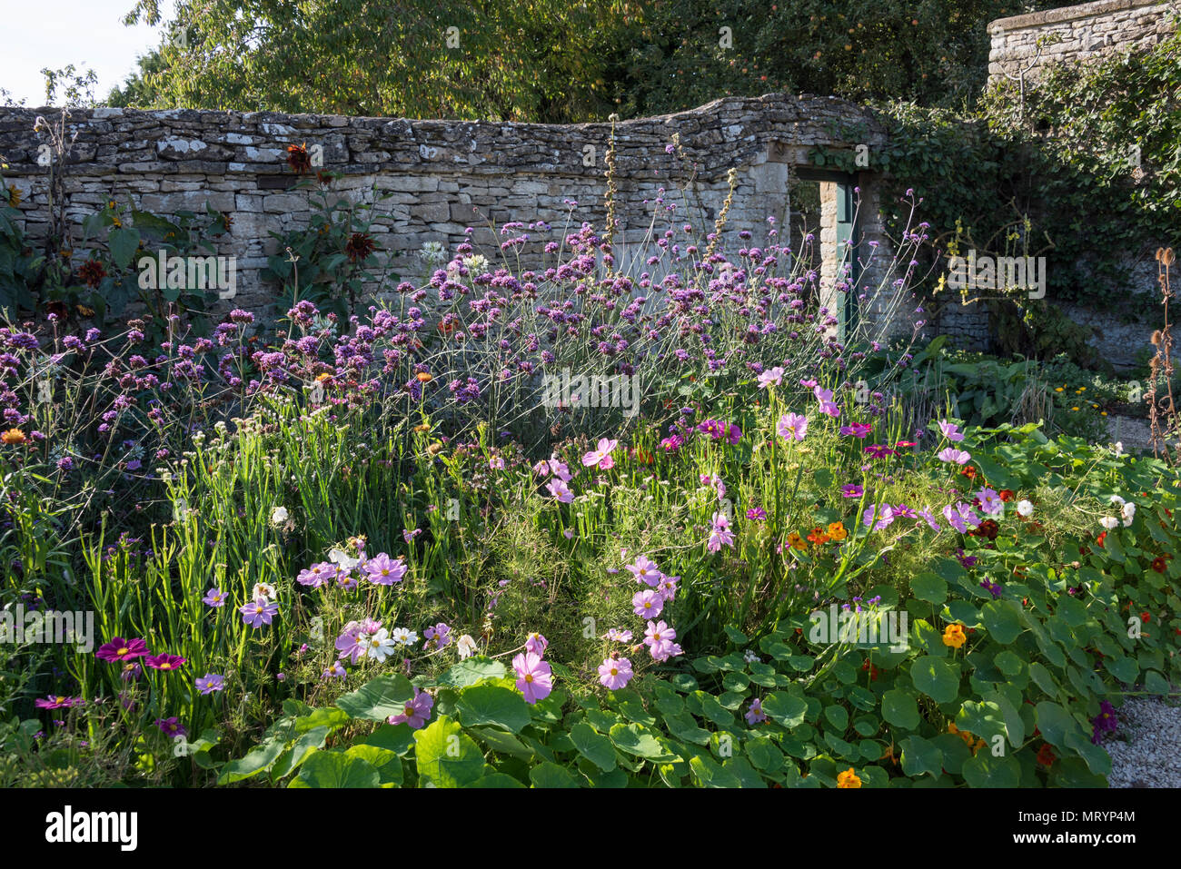 The kitchen garden, Cogges Farm Museum, Witney, Oxfordshire - Stock Image
