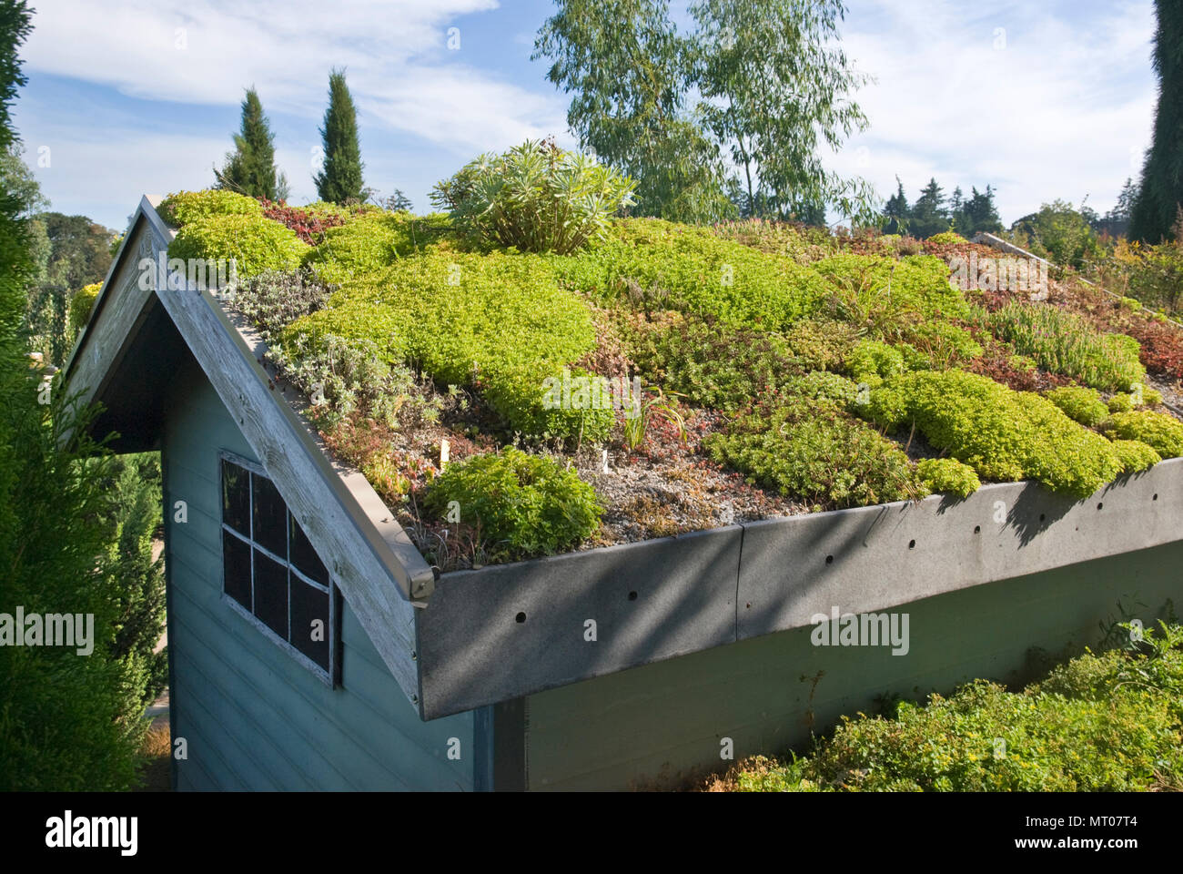 Environmentally sustainable eco-roof made from live plan material including sedum and sempervivum - Stock Image