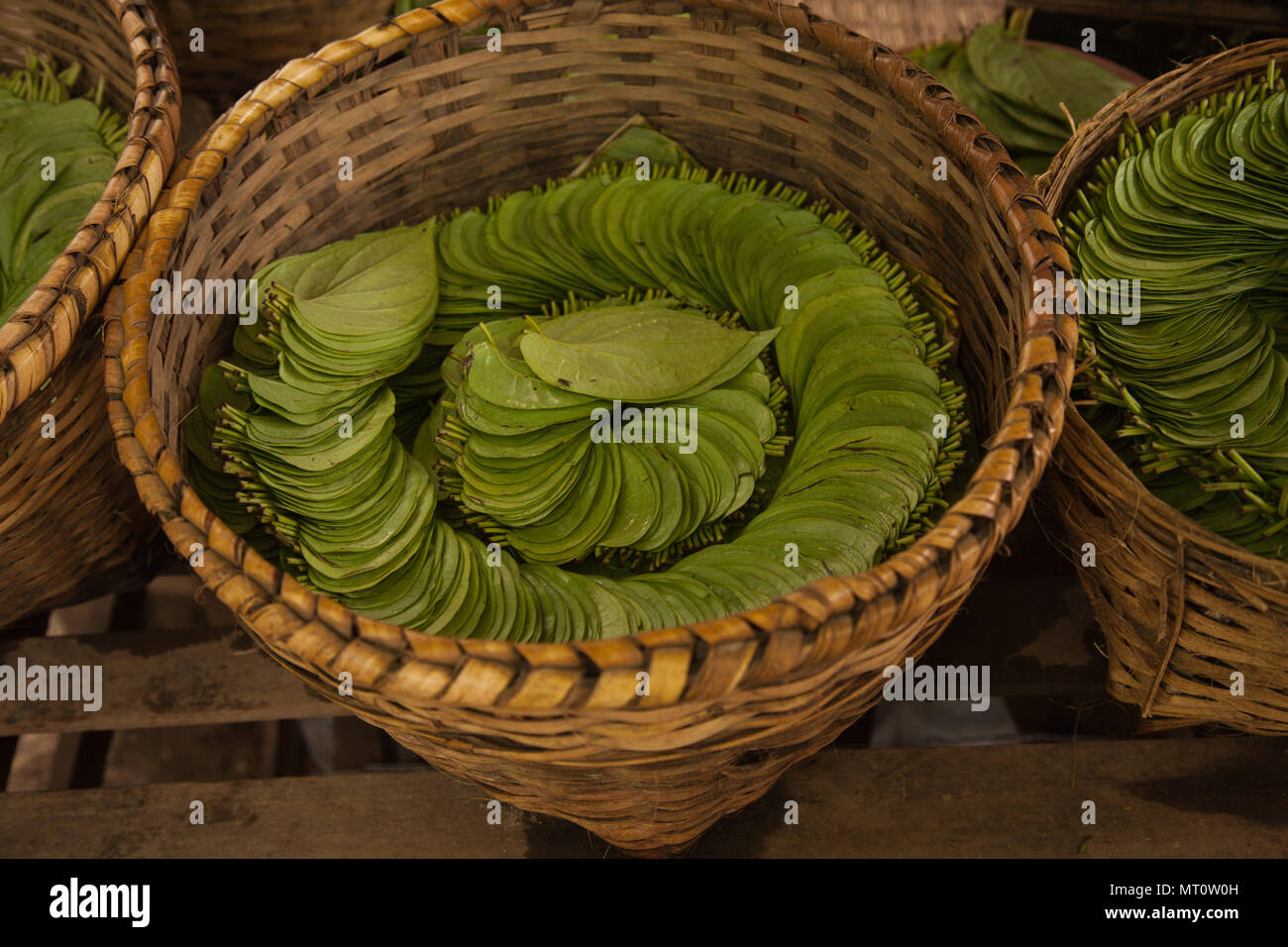 Betel nut leaves, sometimes called the scourge of Asia neatly stacked in a market in Yangon, Burma. - Stock Image