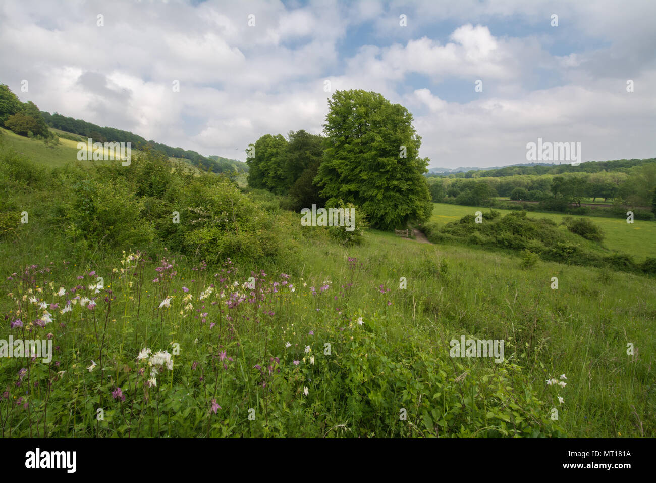 Chalk downland landscape in late spring at Denbies Hillside, Ranmore Common, in the North Downs AONB, Surrey, UK - Stock Image