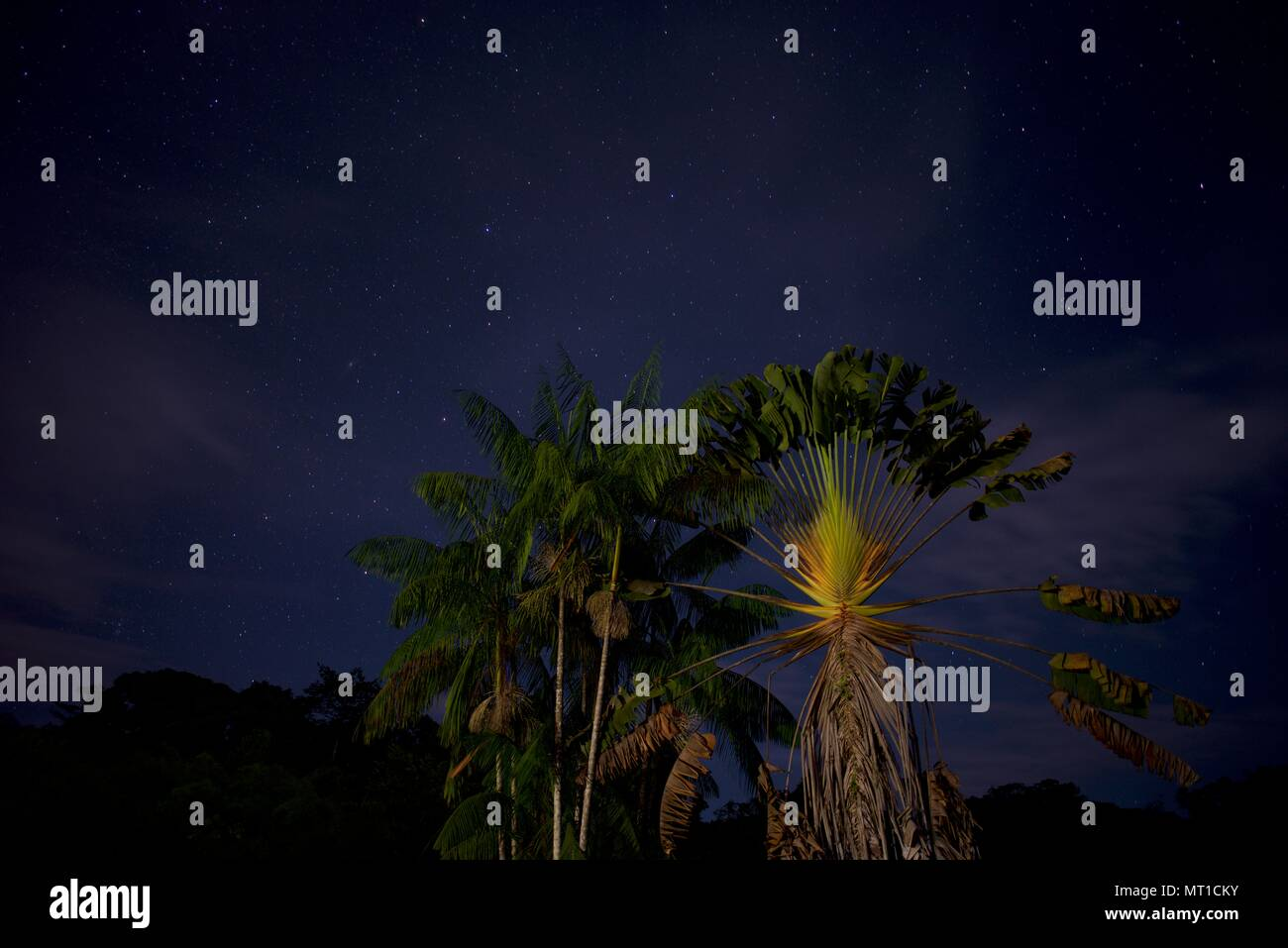 Symmetrical palm tree on a starry night - Stock Image