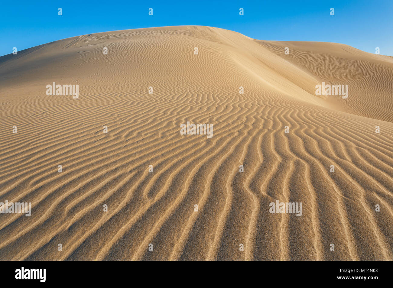 Sand patterns in the dunes of Eucla. - Stock Image