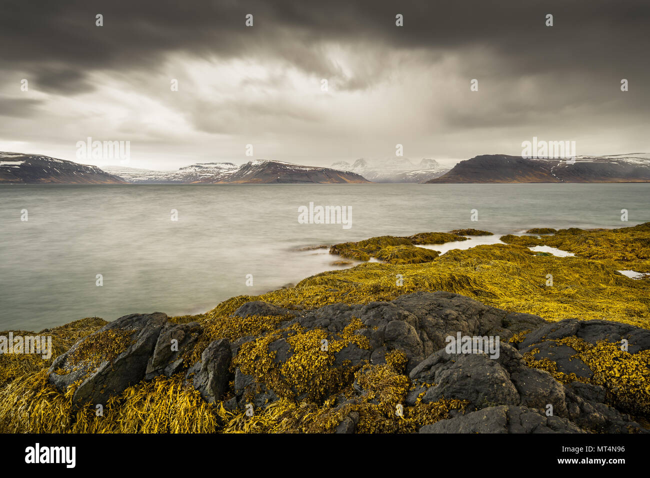 Seagrass and rocks at Suðurfirðir in the Westfjords of Iceland. - Stock Image