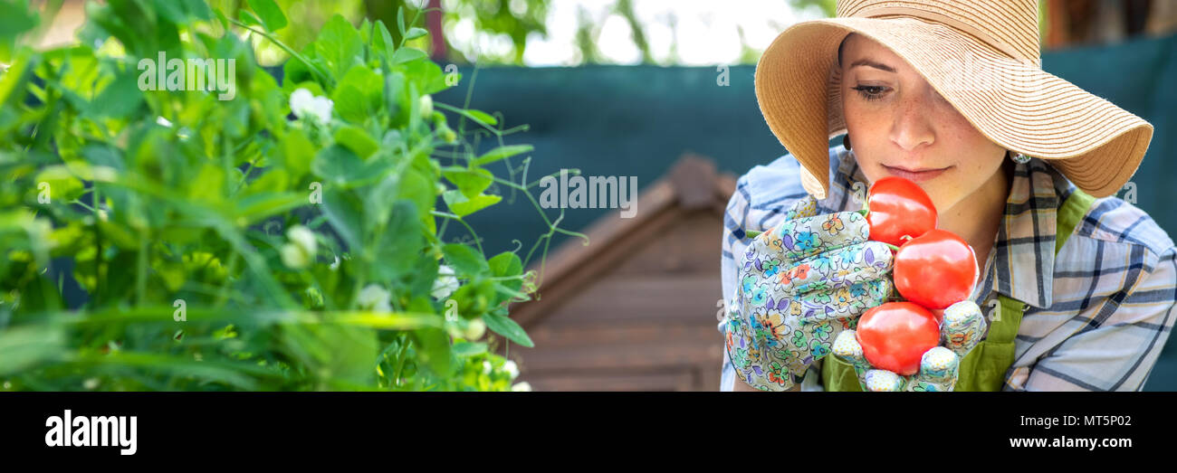 Beautiful young small business farmer smelling freshly harvested tomatoes in her garden. Homegrown bio produce concept. Small business owner. Banner. - Stock Image