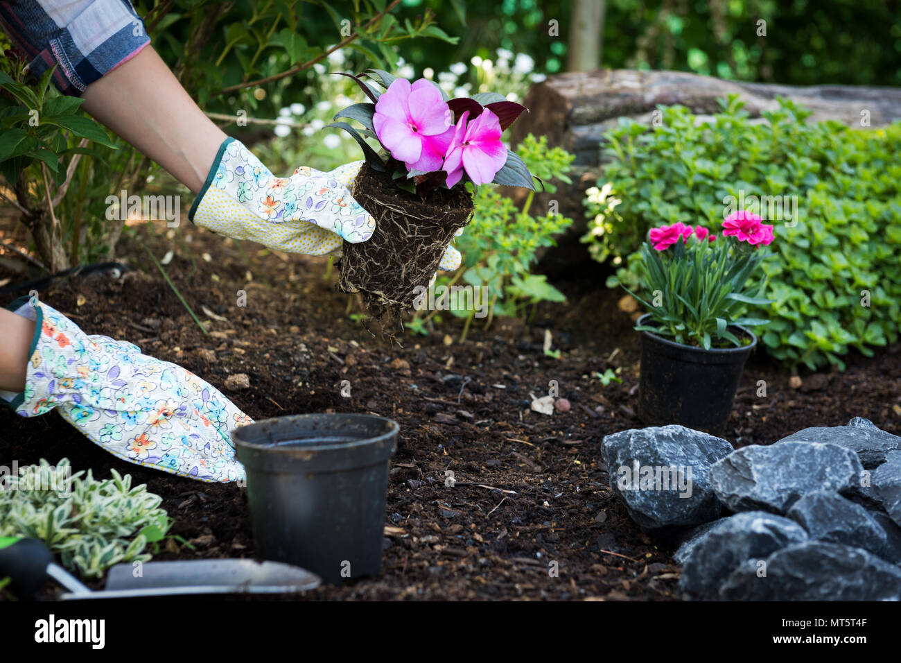 Unrecognizable female gardener holding beautiful flower ready to be planted in a garden. Gardening concept. Garden Landscaping small business start up. - Stock Image