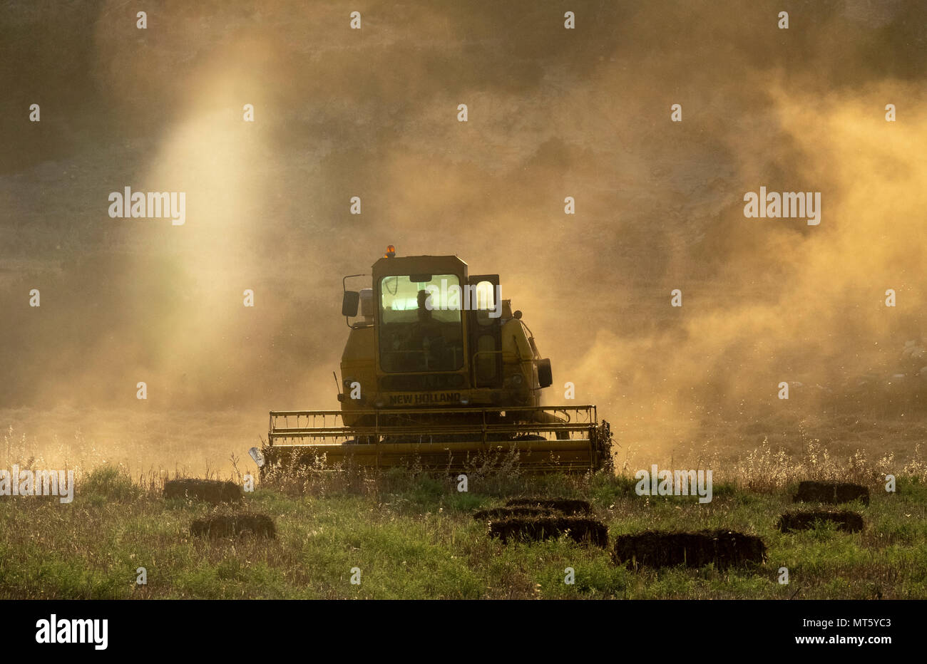 A New holland combine harvester working in a field near Rizokapaza, Northern Cyprus - Stock Image
