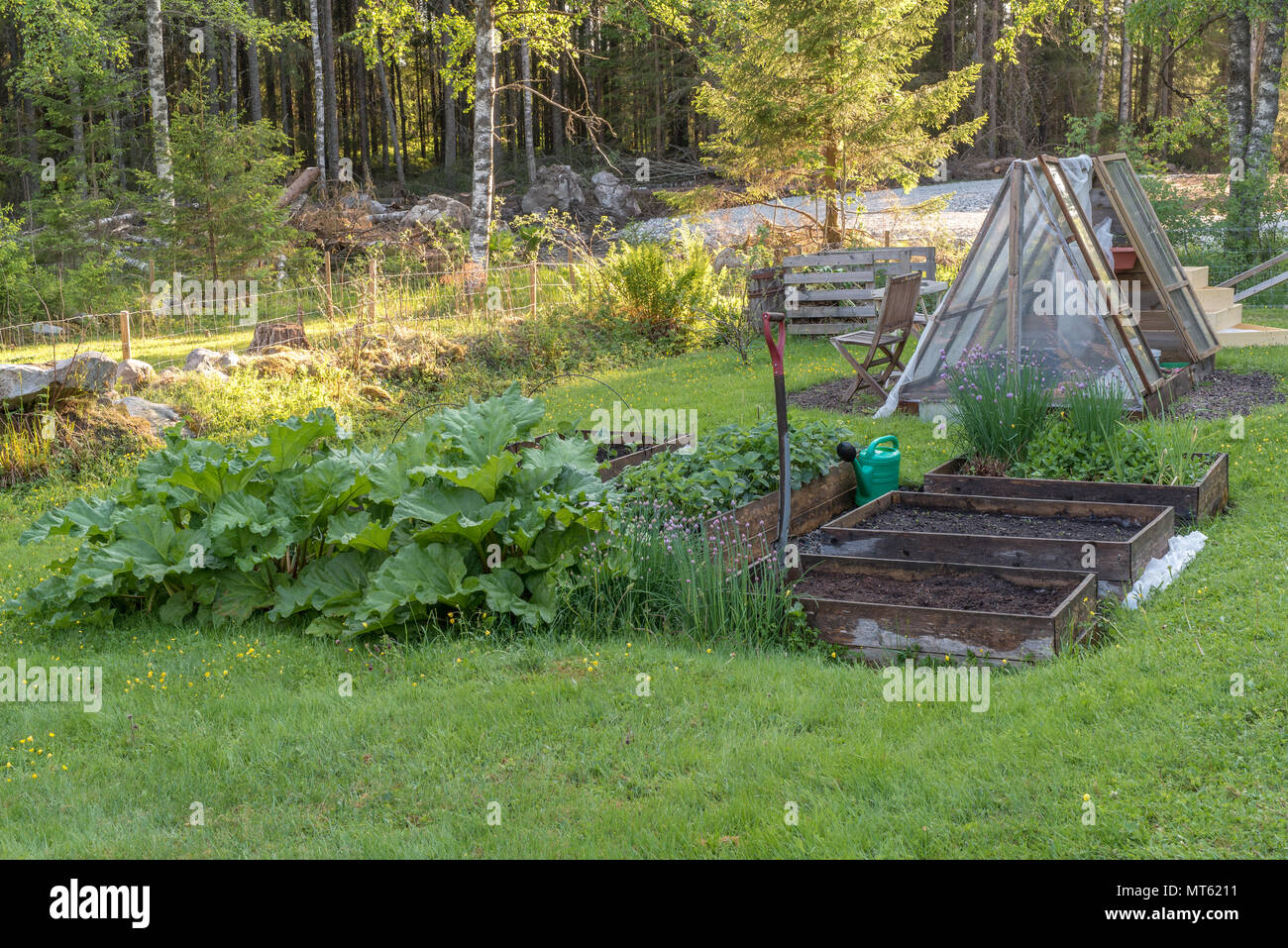overlooking a green garden and a greenhouse in a swedish garden - Stock Image