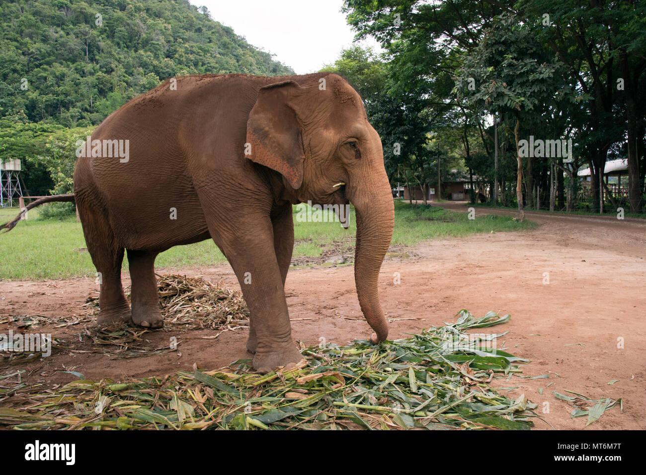 Elephant Nature Park - Stock Image