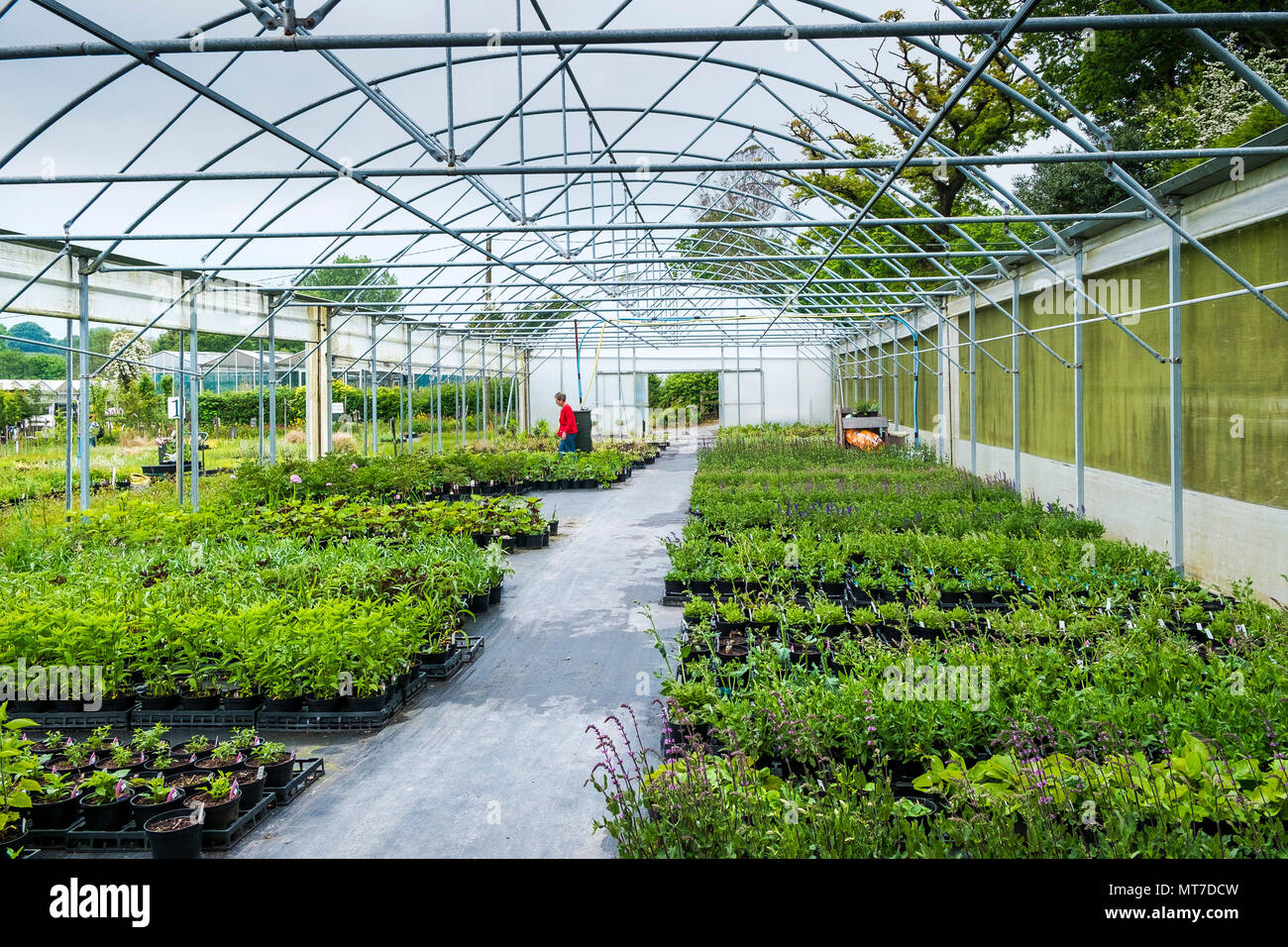 Plants for sale in a garden centre nursery. - Stock Image