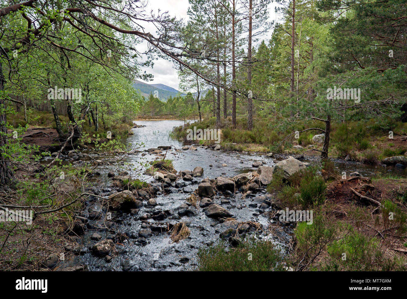 Looking towards Loch Gamhna next to Loch an Eilein near Aviemore in the Cairngorms National Park, Scotland, UK. - Stock Image