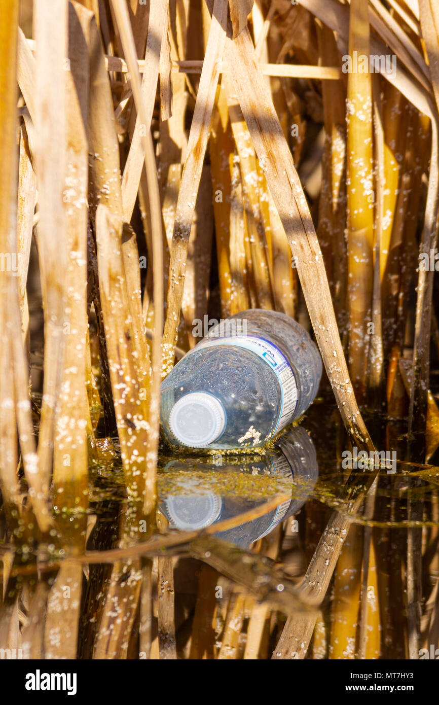 Plastic water bottle floating in a marsh in the Lois Hole Provincial Park in Alberta, Canada - Stock Image