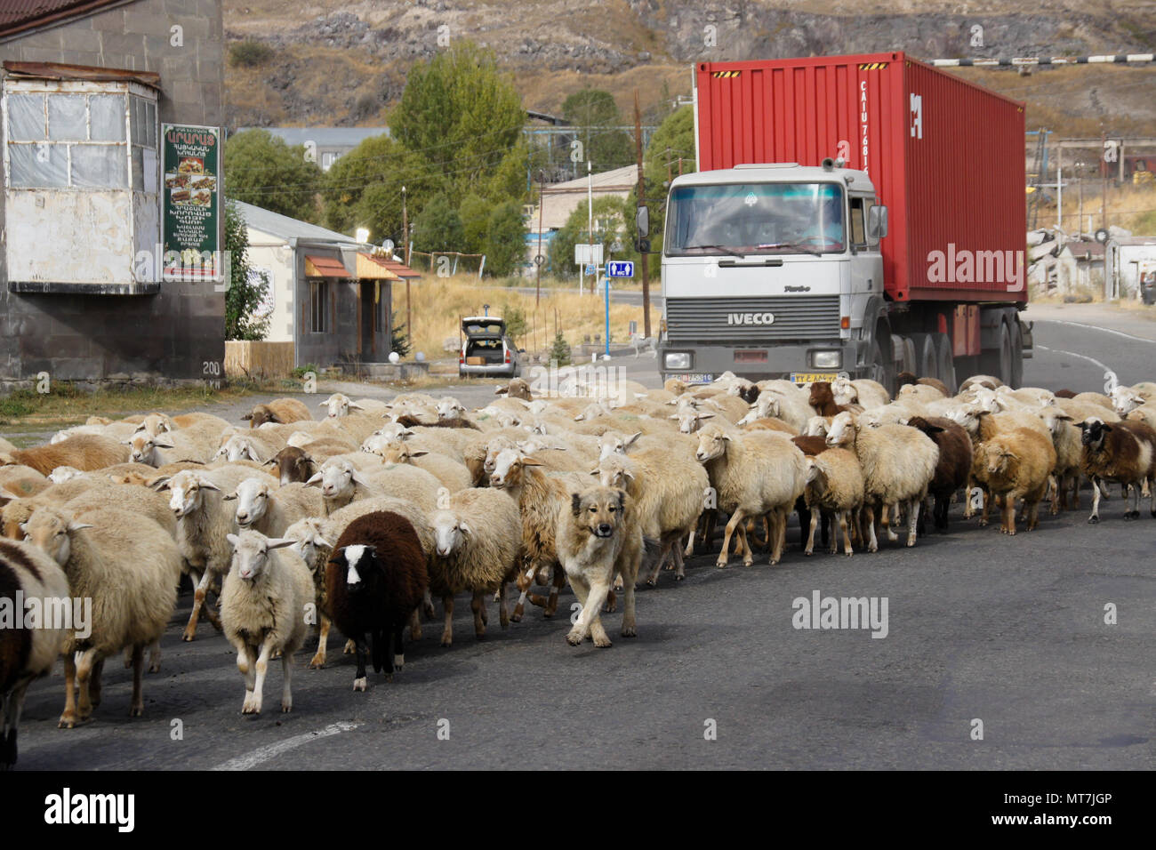 SISIAN, ARMENIA, SEPTEMBER 27, 2017. A flock of sheep blocks traffic as it walks past a local restaurant on the road through town. - Stock Image