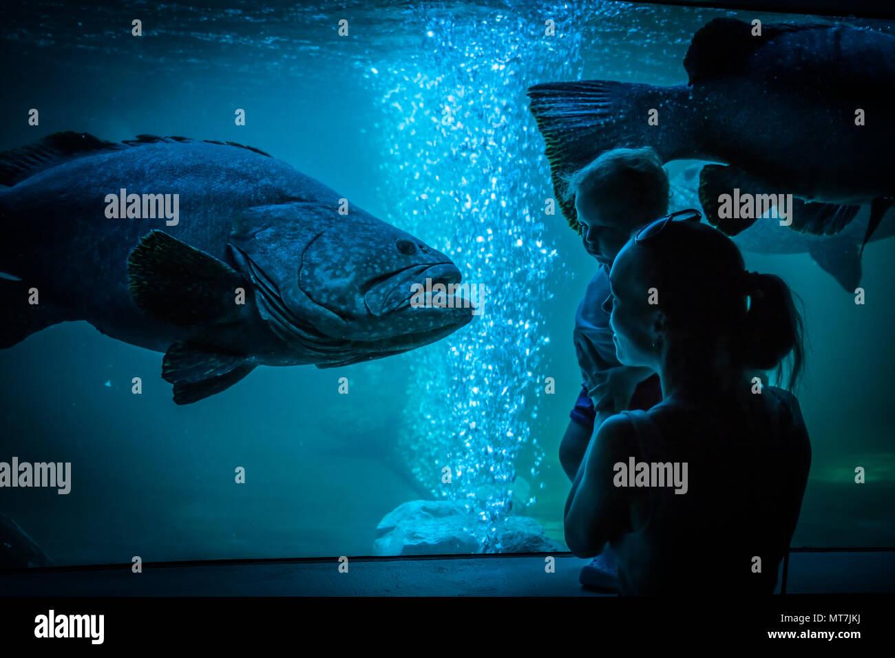 Mother child family leisure activities in public aquarium - Stock Image