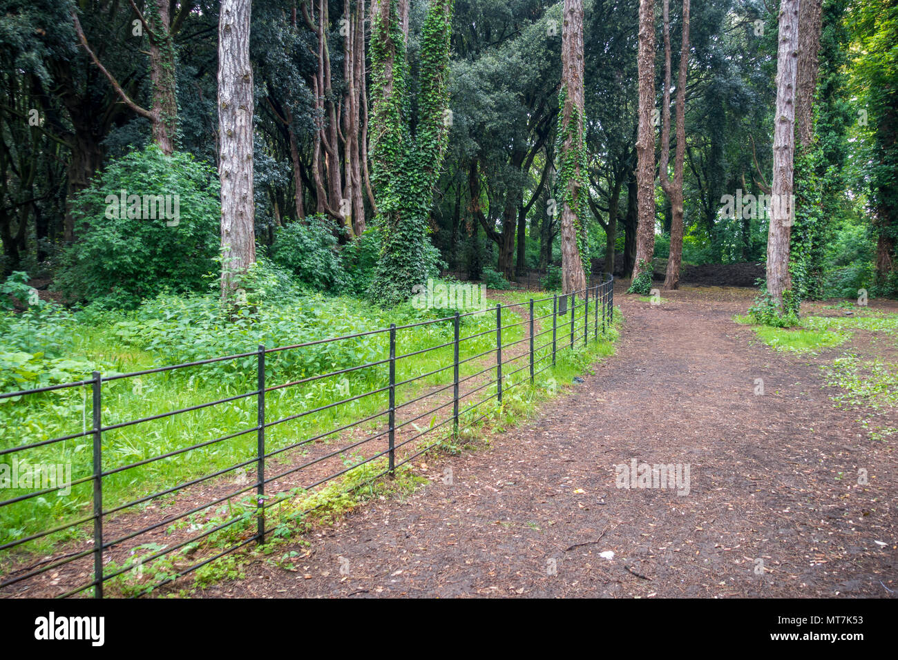Green trees in the backgraound at park in Ireland Stock Photo