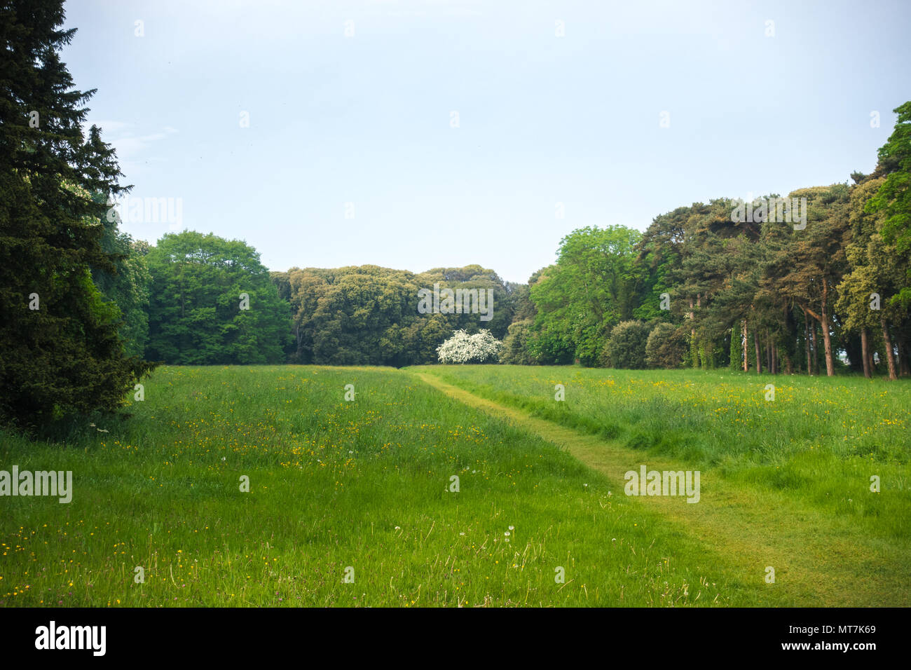 Green trees in the backgraound at park in IrelandStock Photo