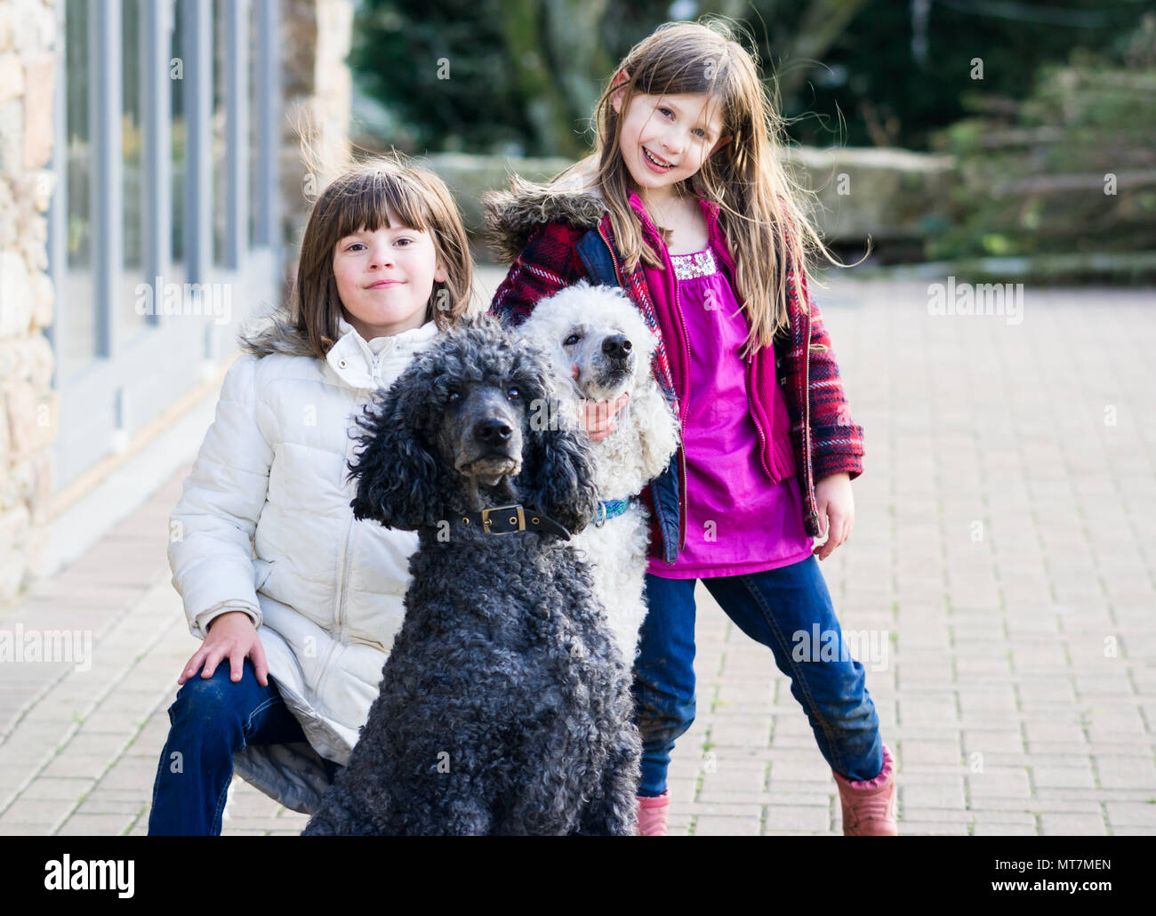 Two caucasian upper class Britsh girls (children) playing and posing with large pet standard poodles in natural coat in a rural country garden - Stock Image