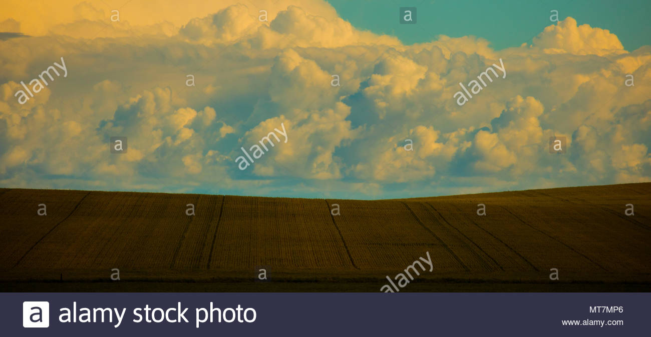 Wheat fields in Australia with cloudy sky. - Stock Image