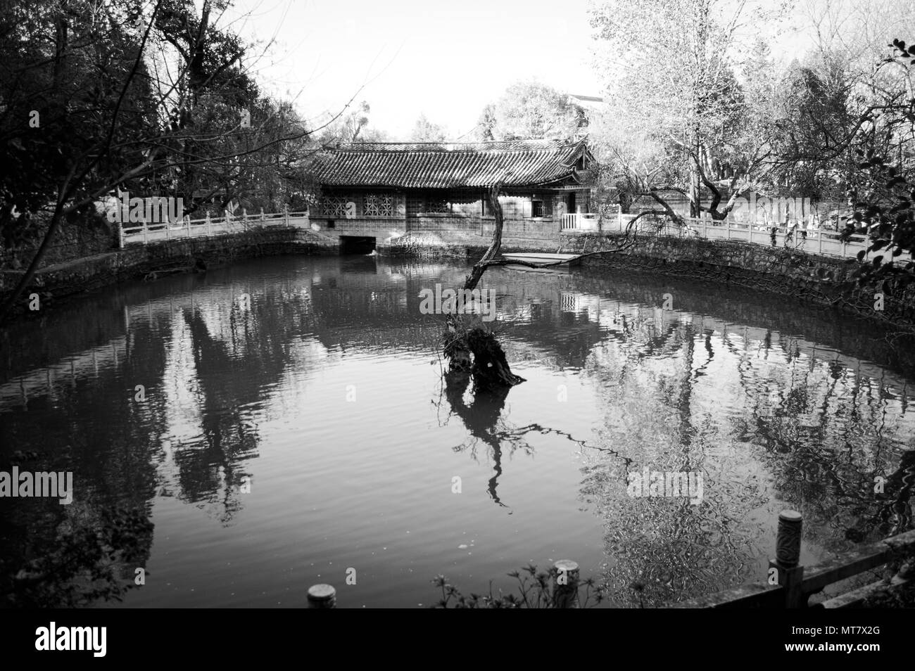 Isolated tree in the Chinese park (Old Town of Lijiang, Yunnan, China) - Stock Image