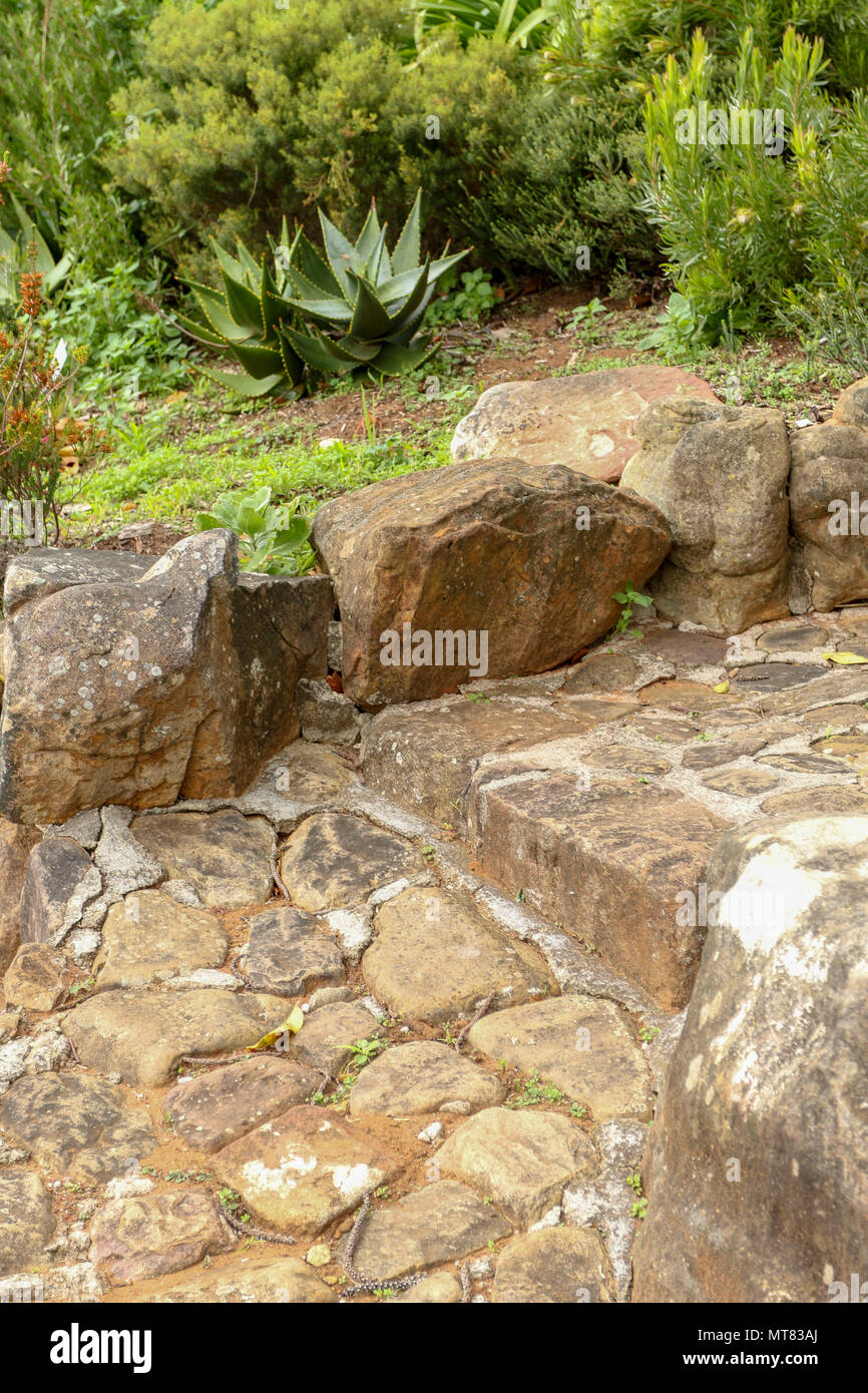 Stone Steps In Kirstenbosch Botanic Garden With Small Cactus And