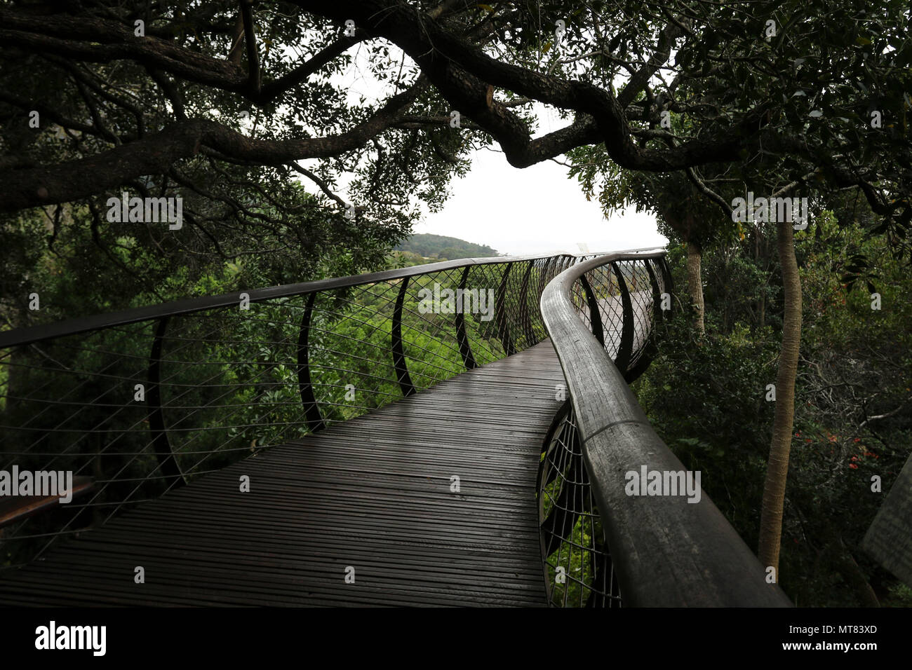 Wooden walkway through trees, Kirstenbosch botanic gardens, Capetown, South africa - Stock Image