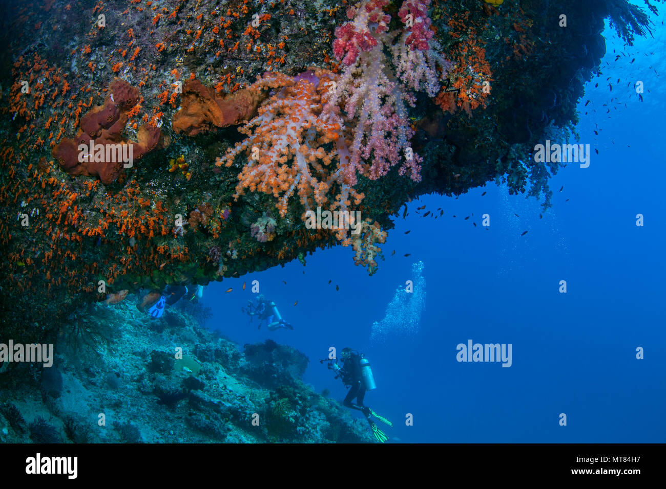 Scuba divers explore reef wall with soft corals under ledge in foreground. Raja Ampat, Indonesia. - Stock Image