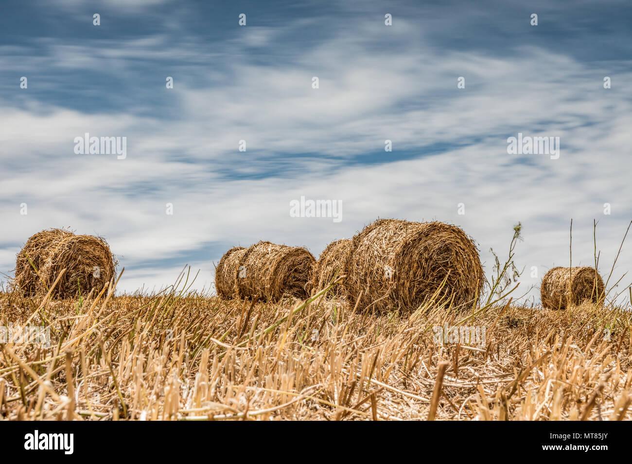 HAY BALES - Stock Image