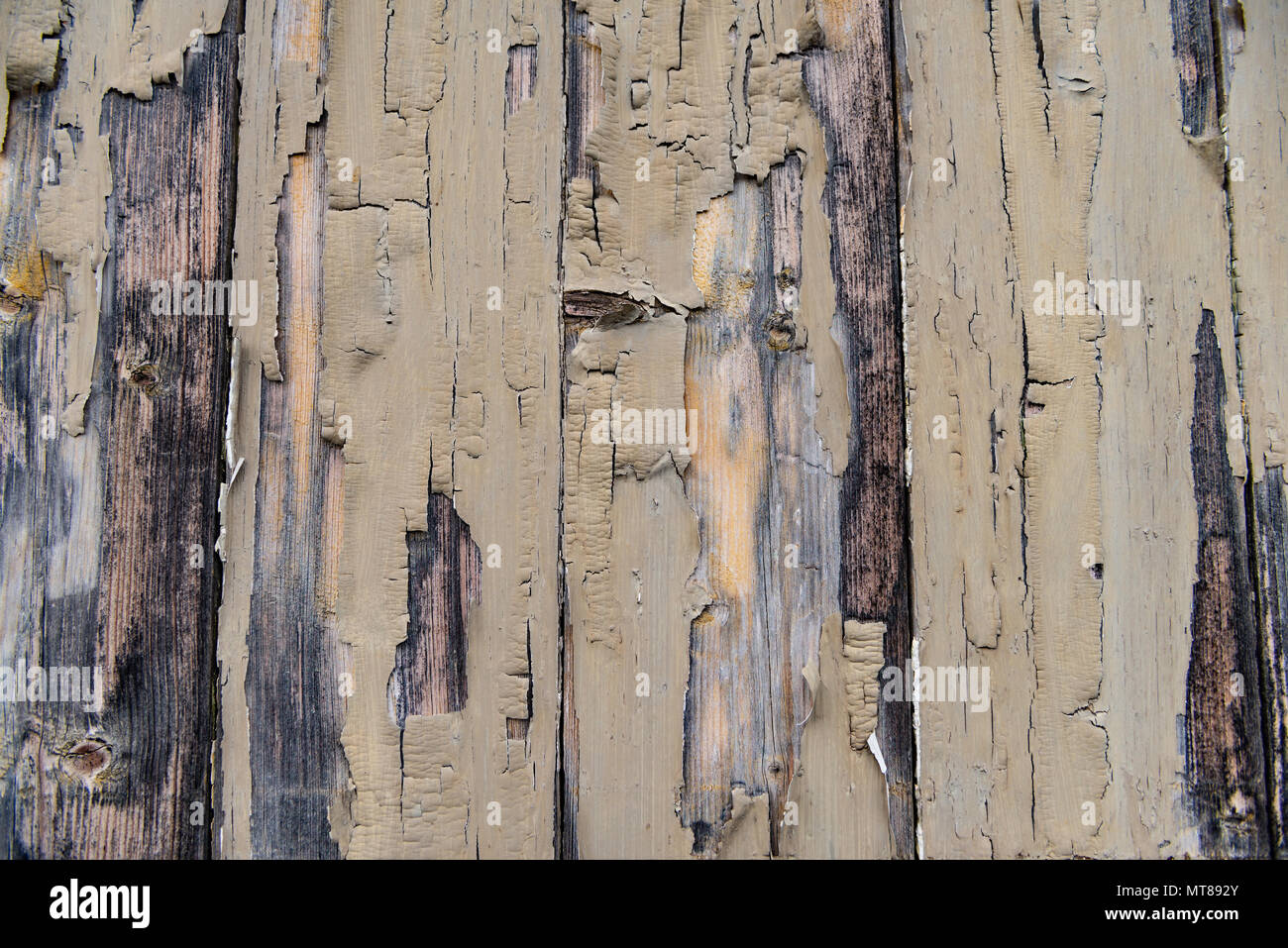 Peeling Paint on distressed timber - Stock Image