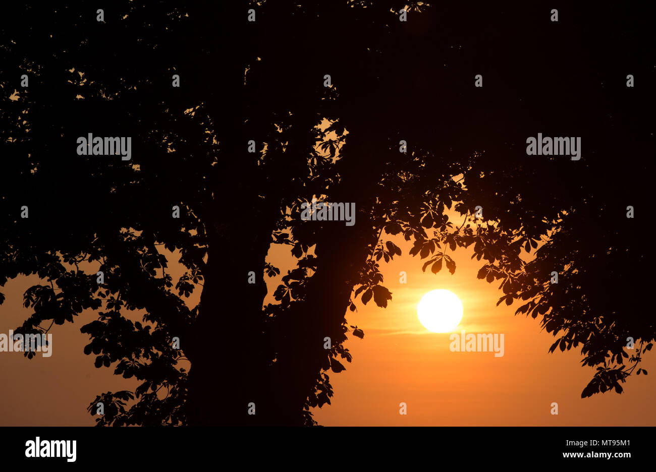 29 May 2018, Germany, Rehda-Wiedenbrueck: The sun rises in front of a treetop. Photo: Friso Gentsch/dpa - Stock Image