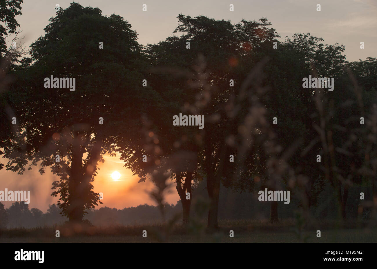 29 May 2018, Germany, Rehda-Wiedenbrueck: The sun rises in front of a row of trees. Photo: Friso Gentsch/dpa - Stock Image
