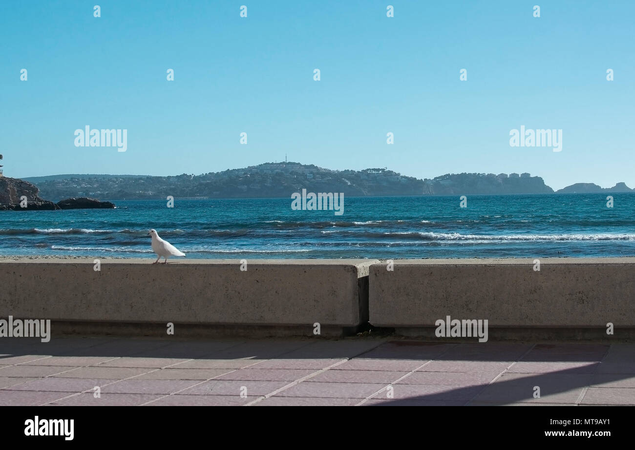White dove on stone wall and ocean behind winter in Mallorca, Spain - Stock Image