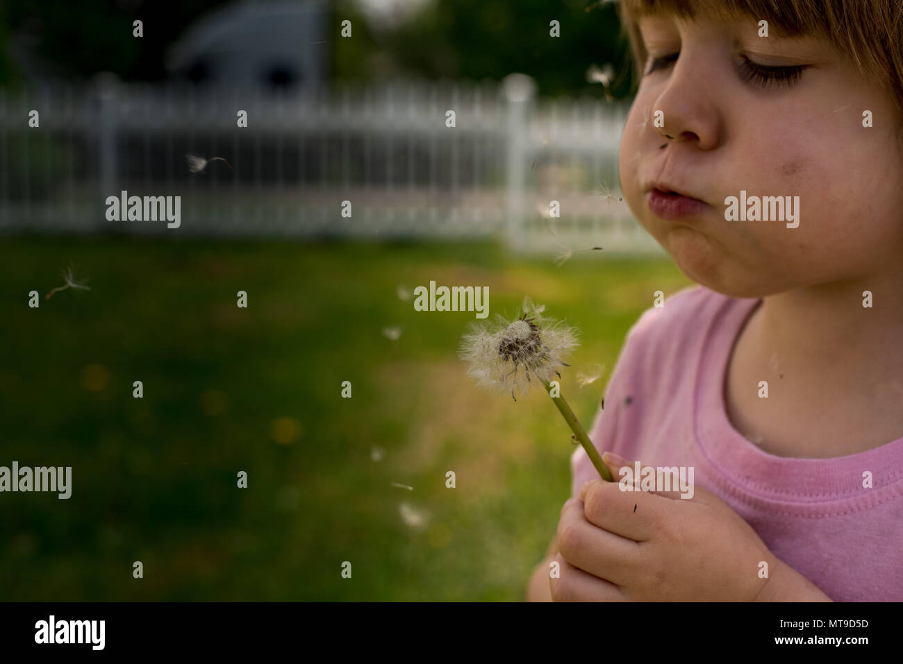 A toddler girld blows on a dandelion in the spring. - Stock Image