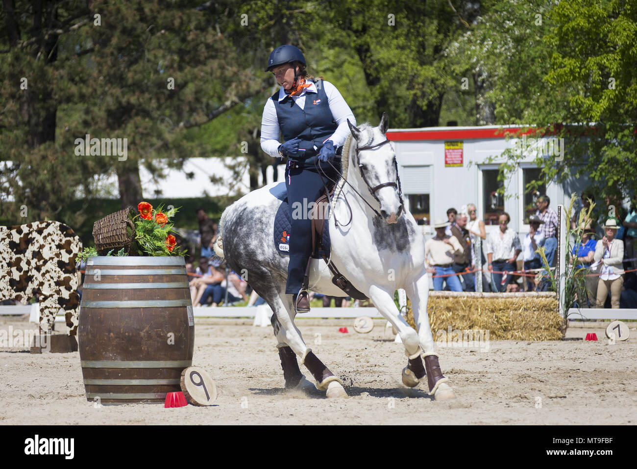 Kelly van Gent in a gallop on a Pimto gray horse during a competiton. EM 2016, Munich, Bavaria - Stock Image