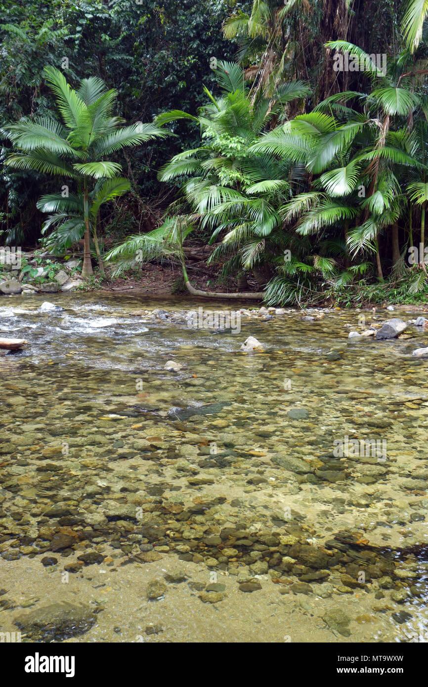 Rainforest creek in Whyanbeel, near Mossman, Queensland, Australia - Stock Image