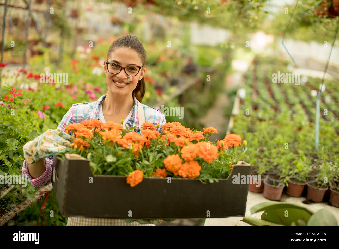 Pretty young woman holding a box full of spring flowers in the greenhouse Stock Photo