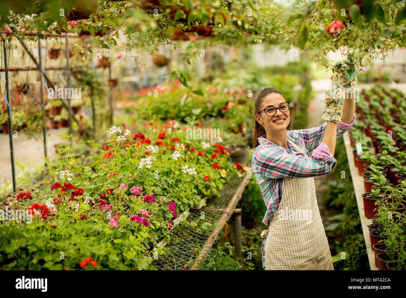 Pretty young woman working with spring flowers in the greenhouse - Stock Image