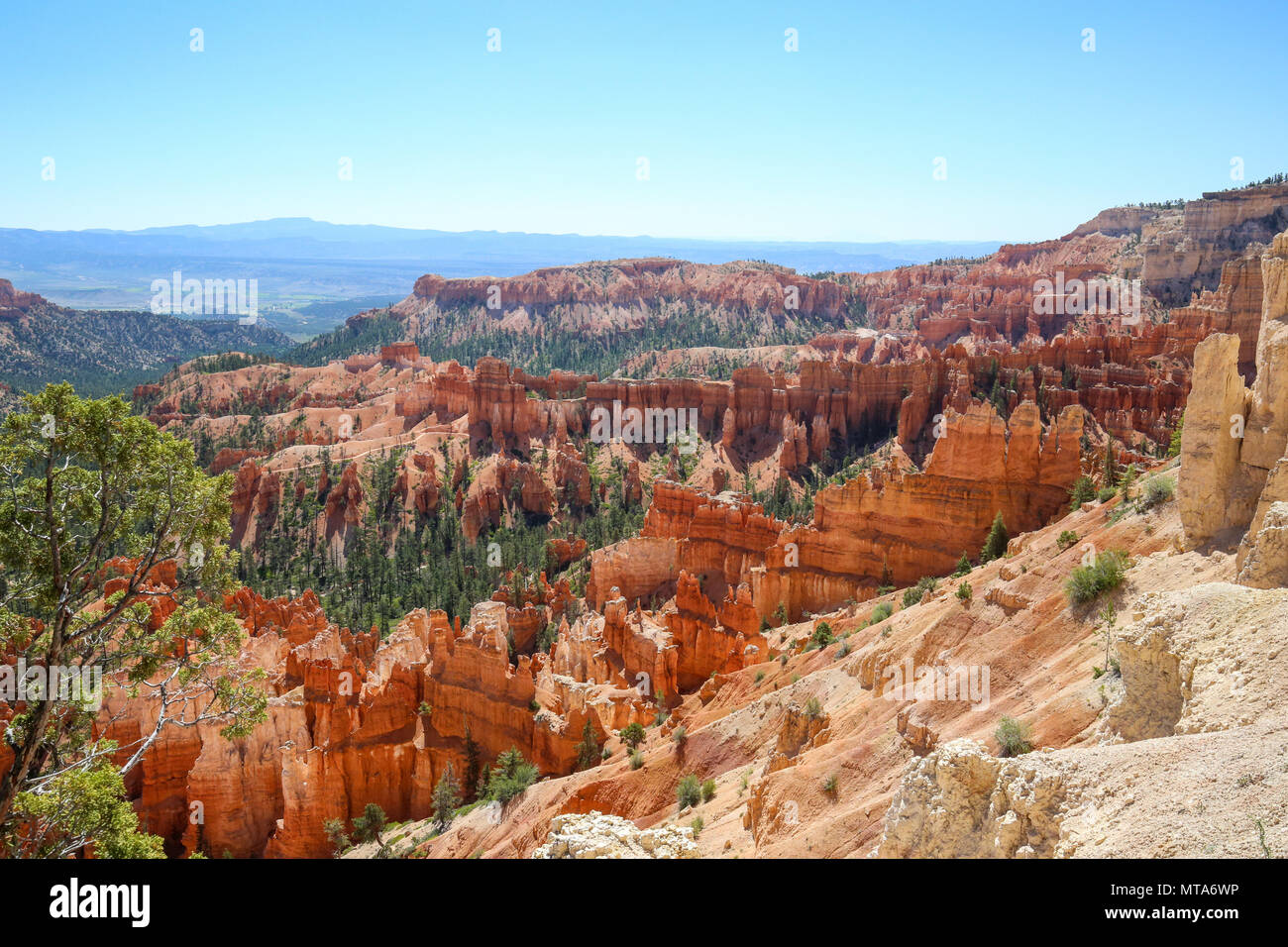 Hoodoos of Bryce Canyon in Bryce Canyon National Park, UT - Stock Image