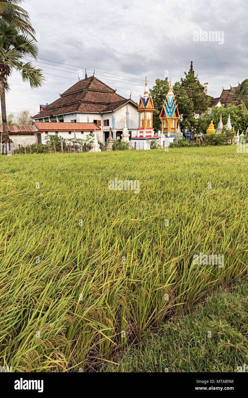 Rice field at Vat Muang Kang temple, Laos - Stock Image