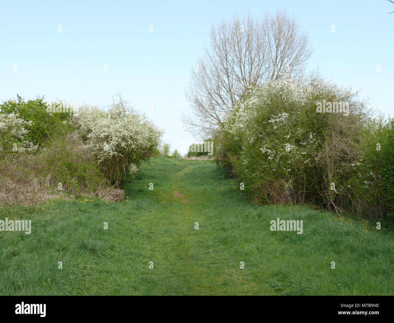 Walking track through the countryside, Suffolk, England - Stock Image