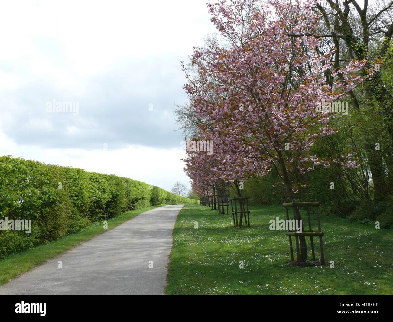 Quiet Rural Road, Suffolk, England - Stock Image