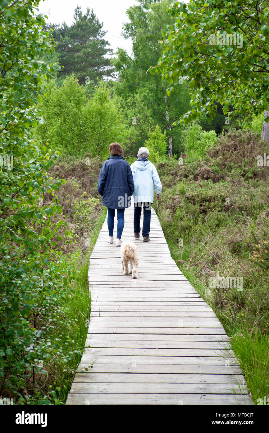 Two people walking a tibetan terrier dod on a board walk n a nature reserve on Thursley common Surrey - Stock Image