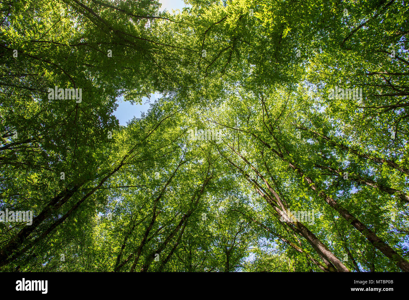 Azerbaijan Nature. Beautiful places - Stock Image