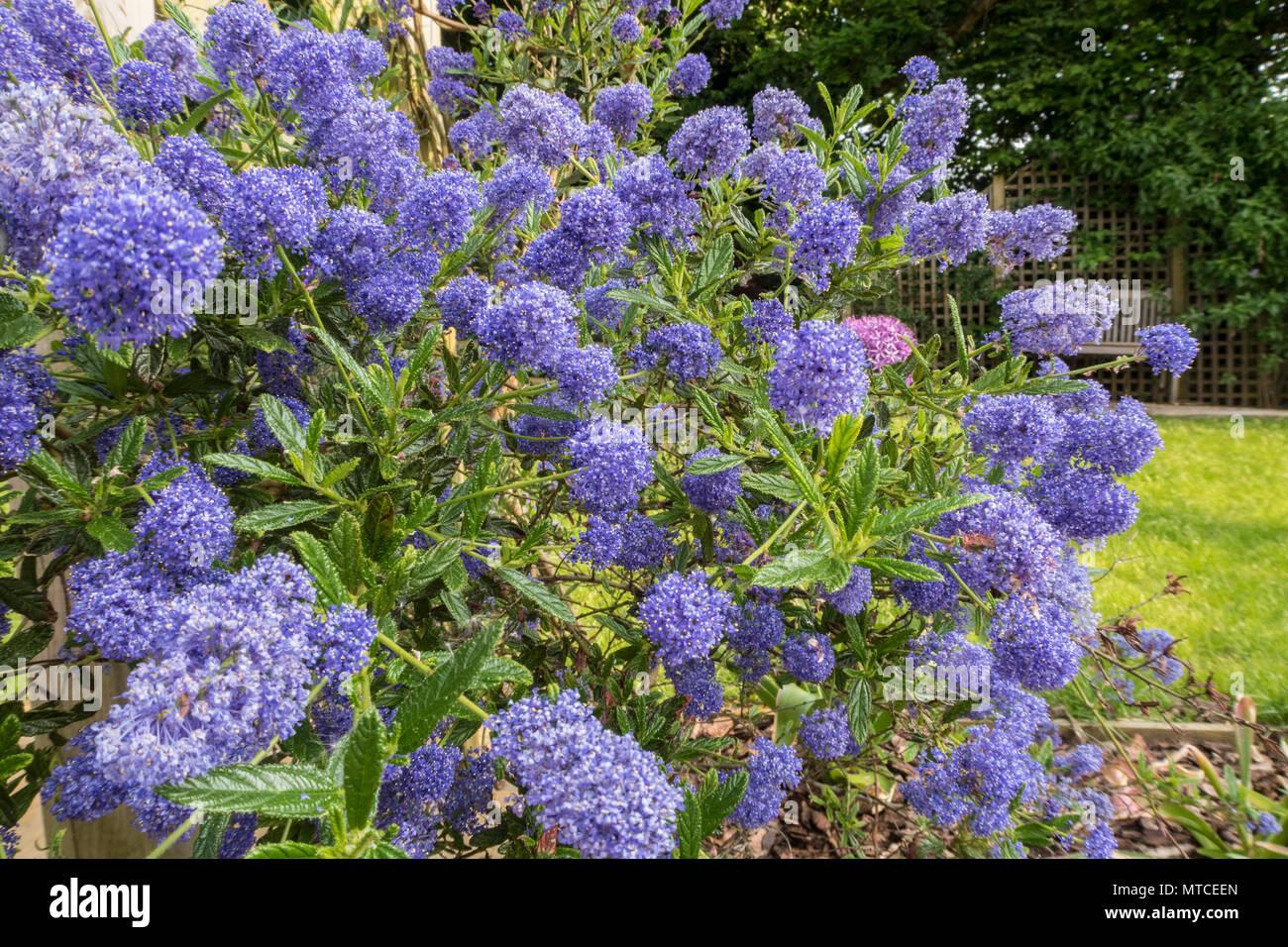 Flower trellis stock photos & flower trellis stock images alamy