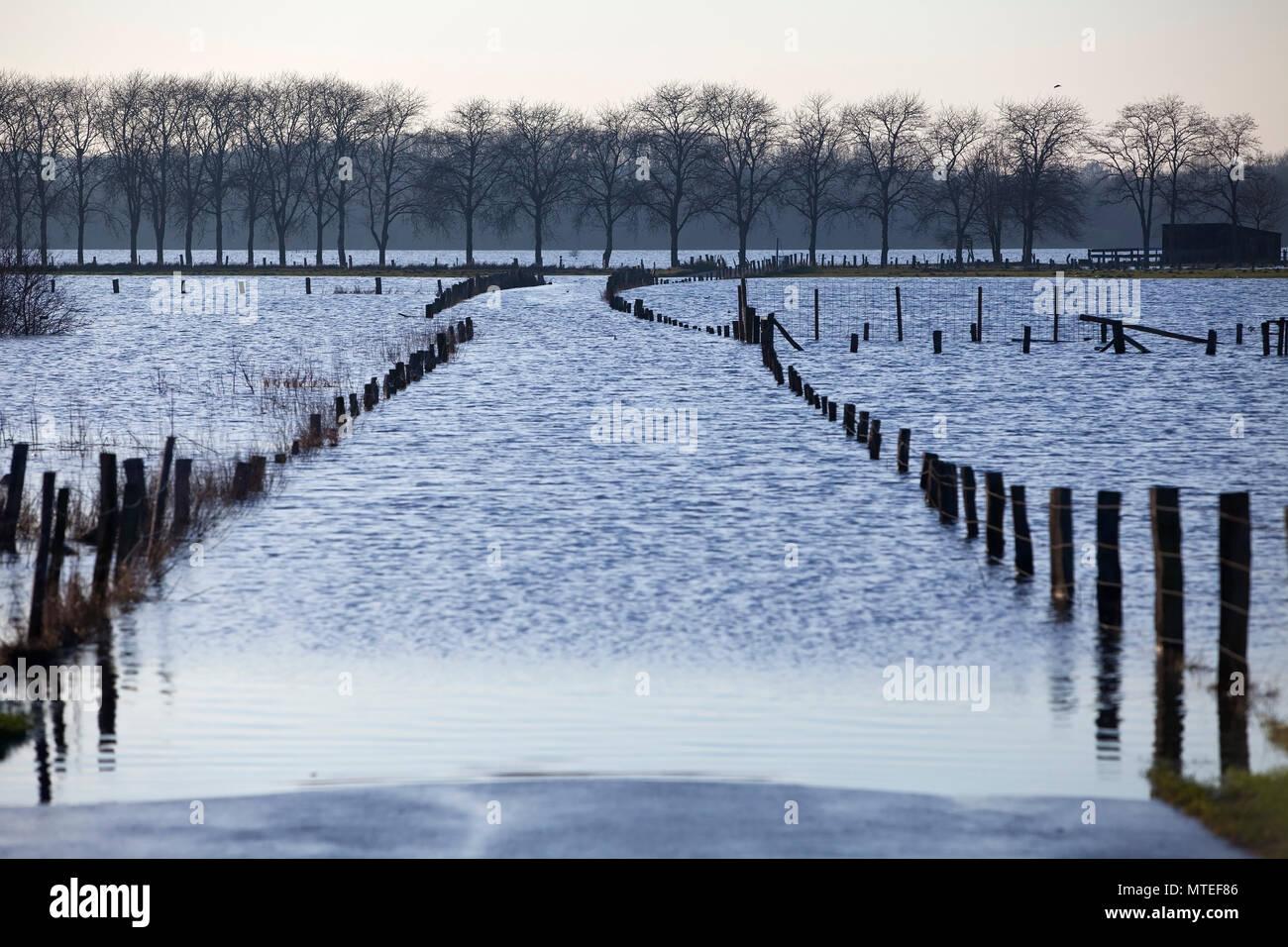 Road to Bislicher Insel at high tide on the Lower Rhine, North Rhine-Westphalia, Germany Stock Photo