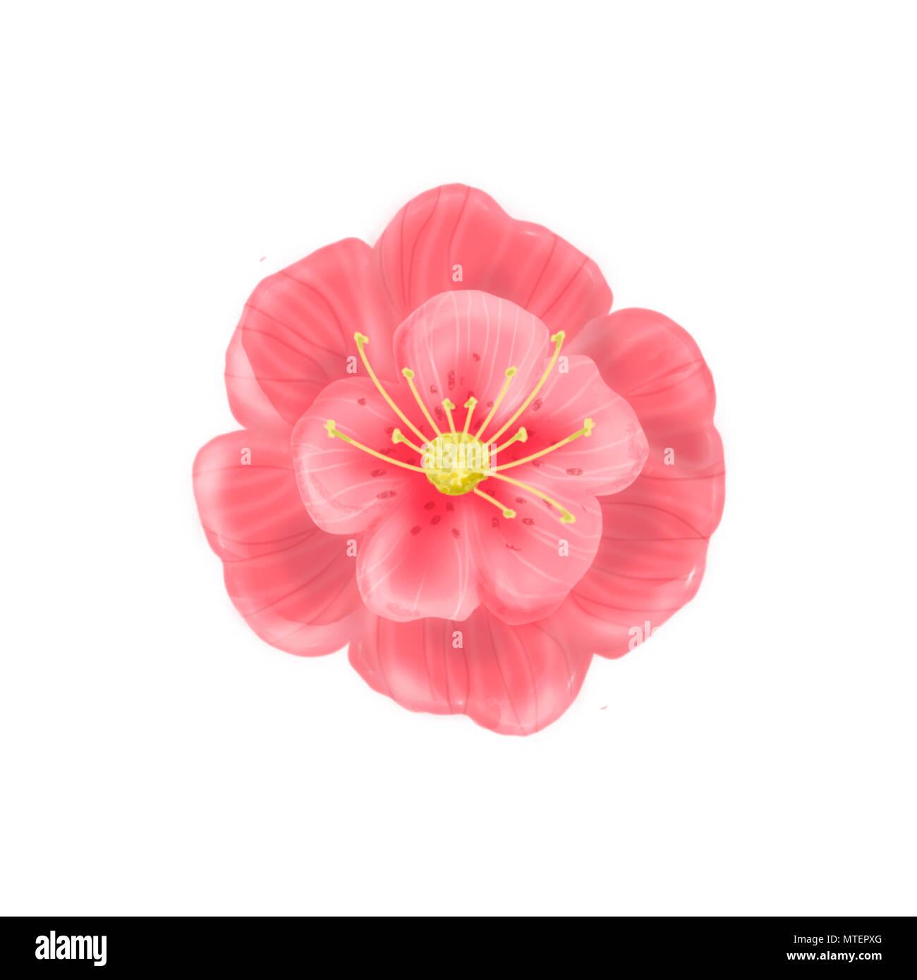 Red flower poppy buds. Poppies illustration. White background - Stock Image