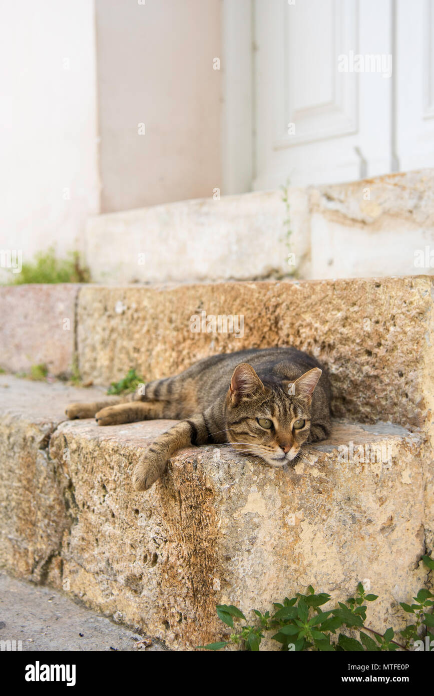 Cat resting on a doorstep in the Plaka neighborhood of Athens, Greece - Stock Image